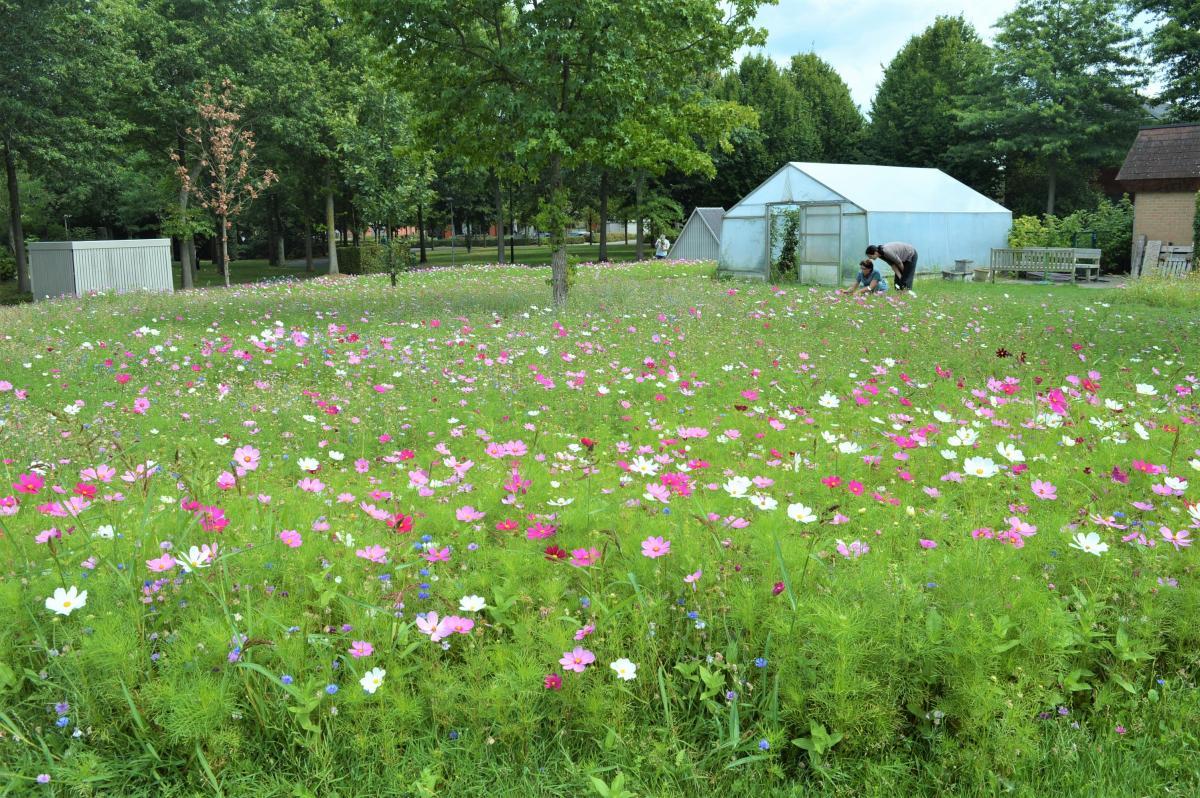 Bloemenweide met paarse, roze en witte bloemen